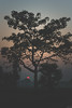 BUT EVERY SUNSET IS DIFFERENT (asifahmedtso) Tags: asia asian sun sunset nikon nikond5500 tree silehoutte red sky skyline life photography december frame