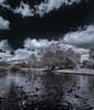 Invasion Of Water Fowl At Santee Lakes (Bill Gracey 18 Million Views) Tags: waterfowl birds coots woodducks santeelakes infrared infraredphotography convertedinfraredcamera ir nature highcontrast clouds vegetation
