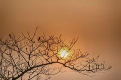 S18_8892h27m (Daegeon Shin) Tags: nikon d750 sun sol tree arbol winter invierno corea korea 니콘 해 태양 나무 겨울 nikkor 200500 니콘렌즈