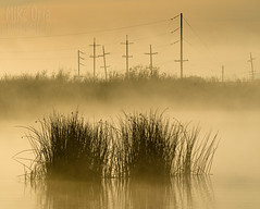 From Bacon Island (mikeSF_) Tags: california delta jonestract baconisland water waterfront waterway tract river oldriver sacramentoriver sacramento holt victoria tule rushes reeds grass poles utility electric power powerlines pentax pentax645z 645 645z 67 m300 300mm wwwmikeoriacom mikeoria mikeoriaphotography