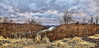 8R9A0829-31Ptzl1scTBbLGERM (ultravivid imaging) Tags: ultravividimaging ultra vivid imaging ultravivid colorful canon canon5dm3 clouds sunsetclouds stormclouds vista river winter scenic sky sunset evening twilight landscape panoramic painterly pennsylvania pa trees weeds