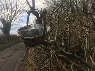 basket in hedge