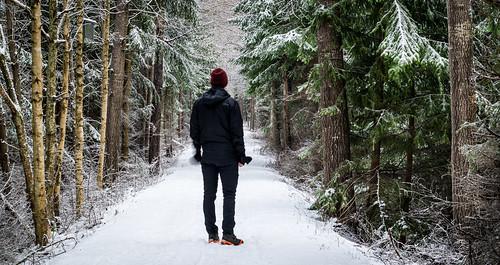 Promenad i snöskogen