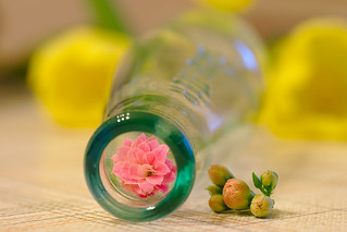 Blossom in a Bottle HMM!