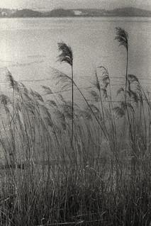 Gangneung (Nikon F2s, Kodak Tri-X 400, Tetenal Ultrafin)