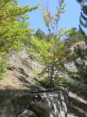DSCN9560 (Gianluigi Roda / Photographer) Tags: apennines latesummer 2012 mountains geologicalevidences geologicaloutcrops trees rocks appenninobolognese crocedeicolli