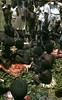 HG3-1-003b (Stichting Papua Erfgoed) Tags: henkgeut papua irianjaya nieuwguinea stichtingpapuaerfgoed irianbarat varkensfeest baliem