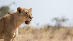 Nairobi-Nationalpark-9885 (ovg2012) Tags: kenia kenya nairobi nairobinationalpark