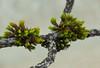 (Laetitia de Lyon) Tags: fujifilmxt10 plante plant macro