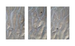 Sand Vines Triptych (Ger208k) Tags: ireland dublin dollymount northbullisland sand beach shoreline lowtide ridges abstract minimalism samsunggalaxy6 android gerardmcgrath triptych