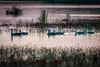 Evening swim (Explored 02.02.2018) (Steven-ch) Tags: patagonia sunset water argentina southamerica evening dusk summer eos7dmarkii lagoroca travel twilight campsite canon duck lake elcalafate santacruz ar