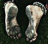 1501773_245640775598591_1346060729_n (paulswentkowski1983) Tags: dirty feet soles filthy female street barefooter black pitch calloused