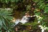 IMG_1709 (Aelred85) Tags: canon600d sigma1750mmf28exdcoshsm jungle burma myanmar shanstate mrbike hsipaw