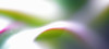 a calming image! (conall..) Tags: calming image abstract dragonplant dragon plant houseplant