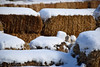 Snowy Bales (MTSOfan) Tags: snow hay bales winter cold january