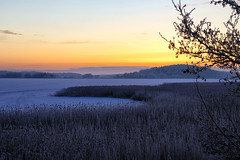 Winter colours (Joni Mansikka) Tags: nature winter outdoor landscape seabay view ice snow trees reeds branches sunset sky colours piikkiö suomi finland atx280afpro tokinaaf2880mmf28
