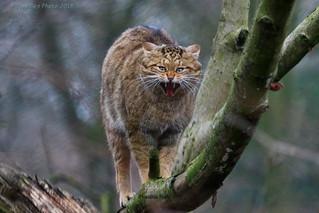 Angry - Sauer