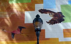 Sounds of flight mural by Sky Black and Mural Mice - Flagstaff, AZ (SomePhotosTakenByMe) Tags: soundsofflight skyblack urlaub vacation holiday usa amerika america unitedstates arizona flagstaff stadt city outdoor gebäude building mural wandbild kunst art muralmice owl eule lantern laterne wall wand downtown innenstadt