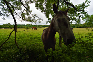 Conversations with equines  -  (Selected by GETTY IMAGES)