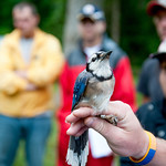 Students in the College of Natural Resources spend early mornings in the field learning Piedmont wildlife management techniques, including bird tagging.