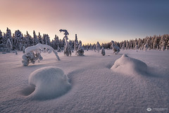 glowing fog (mainone) Tags: arctic glow popcorntree landscape kuertunturi europa finland äkäslompolo kuer suomi snow finnland trees winterwonderland sunrise popcorntrees fog lappland europe sun landschaft