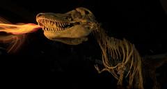 Firestarter (yecatsiswhere) Tags: 2018 lpwa lightpaintingworldalliance lightpainting lightjunkies longexposure melbournemuseum dinosaur light