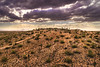 Desert Clouds (tlrichmnd) Tags: desert nature grass outdoors sunset field soil landscape sand noperson outdoor sky water cloudy scenery travel top sheep grassland beach dirtroad dry clouds gravel arid hill road dawn man flora wasteland overlooking sun standing plant fairweather ocean summer hot herd dusk rocky rural large arizona drone p4p
