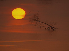 SUNRISE IN 2018 COMPOHFP1071237 (hlh 1960) Tags: sun sunrise sonne sol soleil nature farben colours tree natur landschaft 2018 januar january winter germany