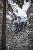 (AleAinaz) Tags: incendio valle di susa torino boschi rocciamelone montagna alberi