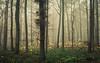 Forest Colors (Netsrak) Tags: baum bäume eifel europa europe herbst landschaft natur nebel wald autumn fall fog landscape mist nature woods