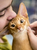 20150920_3902c (Fantasyfan.) Tags: cat show abyssininan kitten kiss fantasyfanin