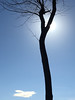 Cloud, Tree, Sun (Sean Anderson Media) Tags: tree silhouette sun winter wintertree wintersky sky flare iphone6s artphotography iphonephotography smartphonephotography stark lonely simplistic simple composition bare
