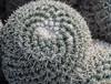 Phoenix_Cactus (Lo8i) Tags: arizona botanicaldesertgardens phoenix sedona cactus circle round 7daysofshooting week30 rounded texturetuesday