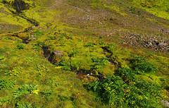 Day 1: Colourful landscape in Staður (Gregor  Samsa) Tags: iceland icelandic north deepnorth summer august hike hiking trek trekking track tracking backpacking trip journey wandering adventure outdoor outdoors scenery scenic nature sun sunny sunlight coast coastal wild wilderness path footpath trail exploration walk walking hornstrandir naturereserve peninsula aðalvík staður