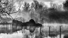 Etang de la Tuille (2) (callifra7) Tags: canoneos5dmarkiv ef24105mmf4lisusm noiretblanc blackandwhite brume ruine etang pond ruin fog