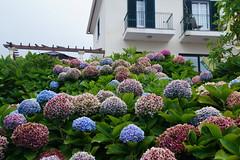 Flower world (Steenjep) Tags: madeira portugal ferie holiday urlaub santana village flower weather house building street road