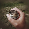 Capturado   Rescatado (Berly Fuster [Theretsuf]) Tags: ave pajaro mano dedos uña atrapado uccello dita chiodo intrappolati 鳥 手 手指 釘子 被困 kevinncajaleon kevin berly theretsuf fuster