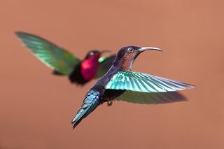 Croisement à tir d'ailes