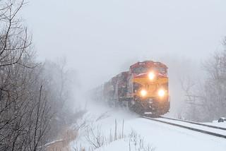 Snowy Southern Belle