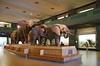 AMNH_022718-017 (bribakove) Tags: 2018 americanmuseumofnaturalhistory nyc upperwestside
