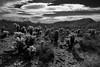 Scottsdale #2 (Perry J. Resnick) Tags: 2018 pjresnick perryjresnick pjresnickgmailcom pjresnickphotographygmailcom ©2018pjresnick ©pjresnick 16mm xf16mmf14r nature light fuji fujifilm atmosphere atmospheric digital shadow texture shadows wa angle perspective naturallight white xf fujinon resnick plant outdoor rectangle rectangular landscape canyon rock sky clouds xpro2 fujifilmxpro2 fujinonxf16mmf14r blackandwhite monochrome monochromatic noir scottsdaleaz desert