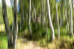Faggeta (cesco.pb) Tags: valtellina valcodera sgiorgio tracciolino sentierotracciolino italia italy lombardia lombardy mossocreativo canon canoneos60d tamronsp1750mmf28xrdiiivcld montagna mountains