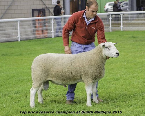 3.Top price Builth r.champion Doublegold 2015 4800gns