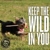 And have fun doing it (itsayorkielife) Tags: itsayorkielife yorkie yorkielove yorkiememe yorkshireterrier