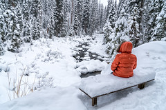 A bench for pondering. (Patty Bauchman) Tags: montana ouselfalls bigskymt snow landscape nature winter