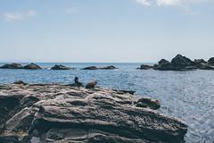 Cap Palliser (bruit_silencieux) Tags: cappalliser palliser wellington newzealand nature landscape sigma35mm14art sonya7 travel roadtrip ocean pacific seals