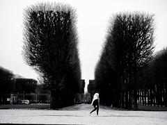 Flat Top (Feldore) Tags: paris jardin du luxembourg hedge square avenue french woman walking head scarf minimal feldore mchugh em1 olympus 1240mm