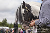 Cob in hand (LindseyBards photography) Tags: pony horse inhand canon 5d mark ii 24105mml agricultural show cob