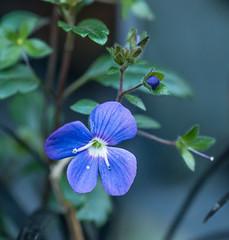 Found. (Omygodtom) Tags: green flower flickr blue surviver tamron90mm tamron macro macrodreams scene scenic senery outside nikkor 7dwf coth5 natural nikon d7100 dof diamond digital