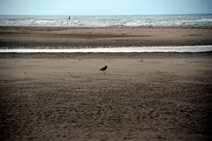 Billy No-Mates (Worthing Wanderer) Tags: norfolk summer sunny farmland coast seaside nelson holkham burnham hero august